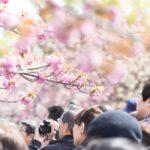 花見をする風景